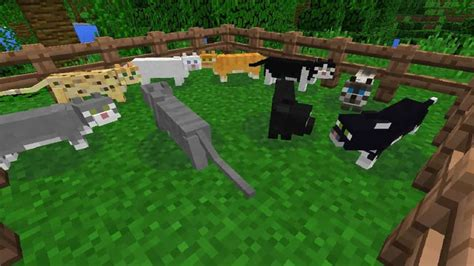 Minecraft - How to Tame Cats - Guided Gamer