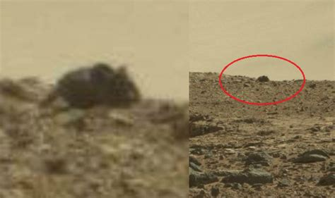 Giant Mouse found on Mars? Life on Mars confirmed with